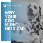 Why Your Dog Might Need CBD